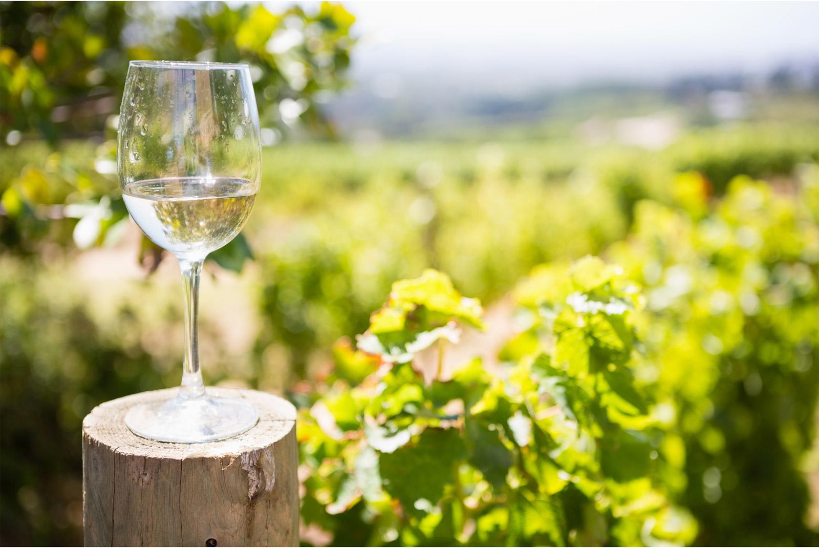 copa de vino blanco tipos de copas de vino