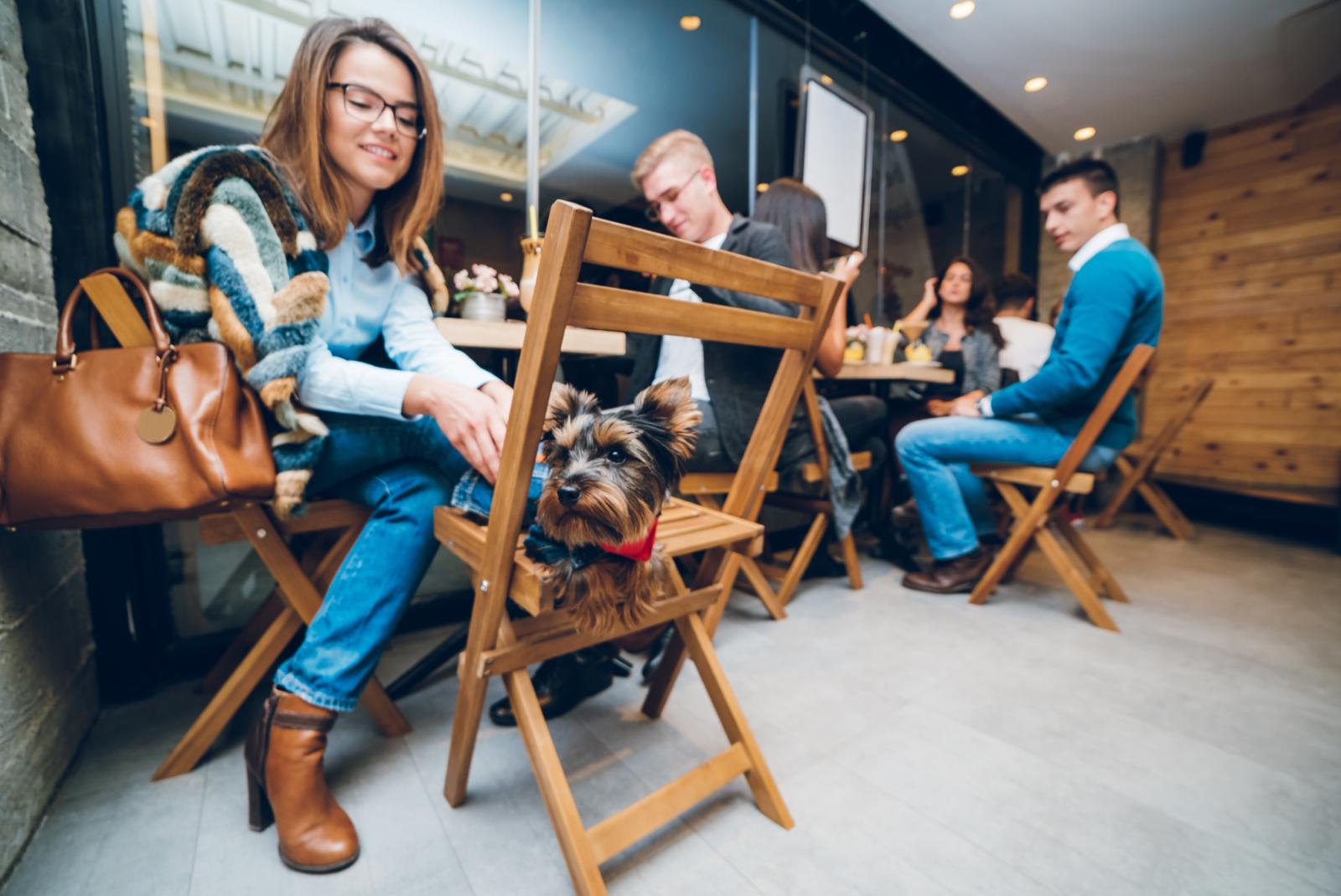 Terrazas y restaurantes pet friendly